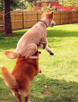 cachorros_bolinha.jpg