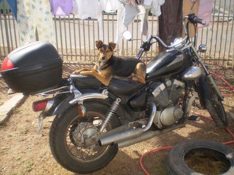 lupita cachorra na moto